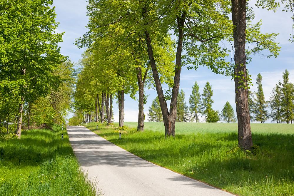 Baumallee, Allee, Schloss Waldreichs, Wandern, Wandertipp, Rundwanderung, Ausflug, Teiche, Waldviertel, Niederösterreich