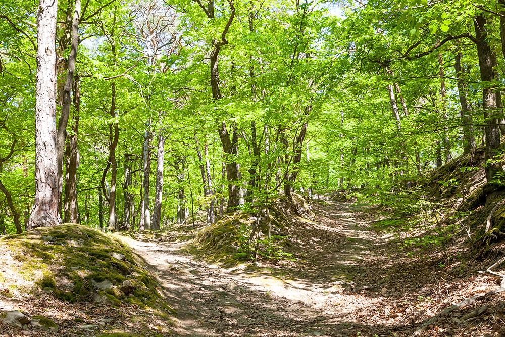 Eichenwald, Wanderweg, Dürnstein, Wachau, Niederösterreich, Donau, Donautal, Wandern, Ausflug, Wandertipp