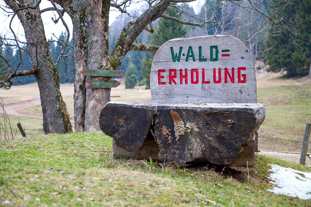 Waldbett, Walderholung, Kiensteinder Öde, Ebenwaldhöhe, Voralpen, Kleinzell, Niederösterreich, Wandern, Wandung, Almen, Alm, Weide