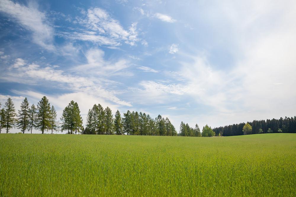 weites Land, Baumallee, Allee, Schloss Waldreichs, Wandern, Wandertipp, Rundwanderung, Ausflug, Teiche, Waldviertel, Niederösterreich