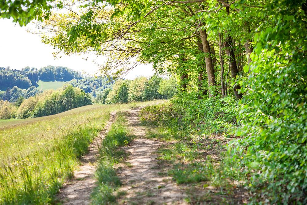 Wanderweg, Hafnerberg, Klein Mariazell, Via Sacra, Wallfahrt, Wienerwald, Niederösterreich, 3-Kirchen-Wanderung, Wandern, Ausflug, Wandertipp