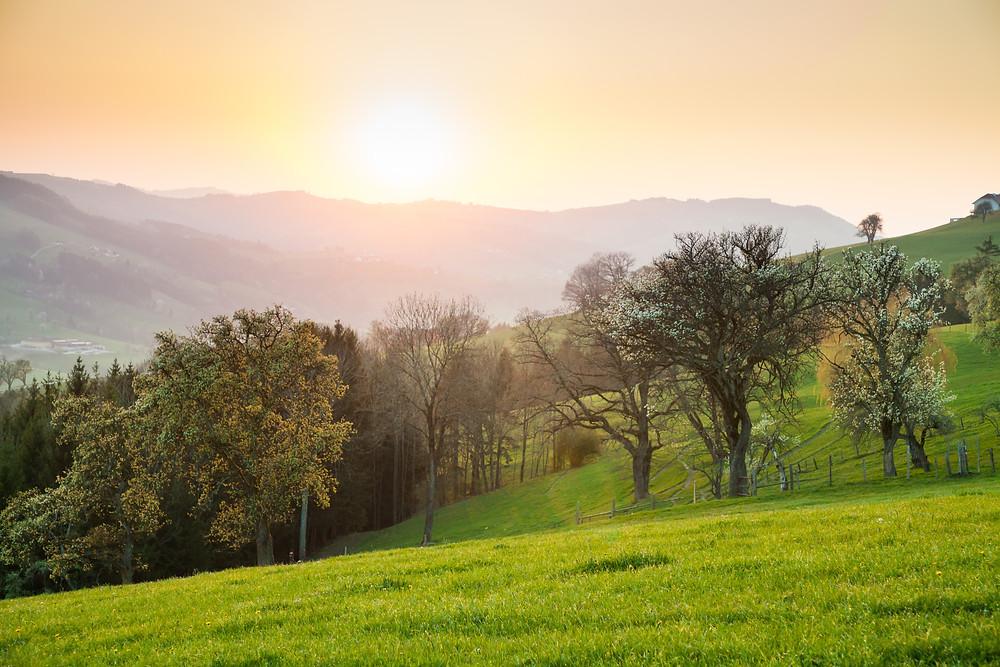 Sonnenuntergang, Mostviertel, Mistbirnbaum, Baumblüte, Niederösterreich, Wandern, Wanderung, Landschaft, Landschaftsfotografie