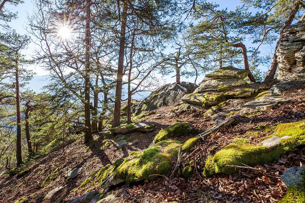 Felsformation, Spitz an der Donau, Wachau, Niederösterreich, Wandern, Wanderung, Bärenwand, Winterwandern, Felsen, Steig