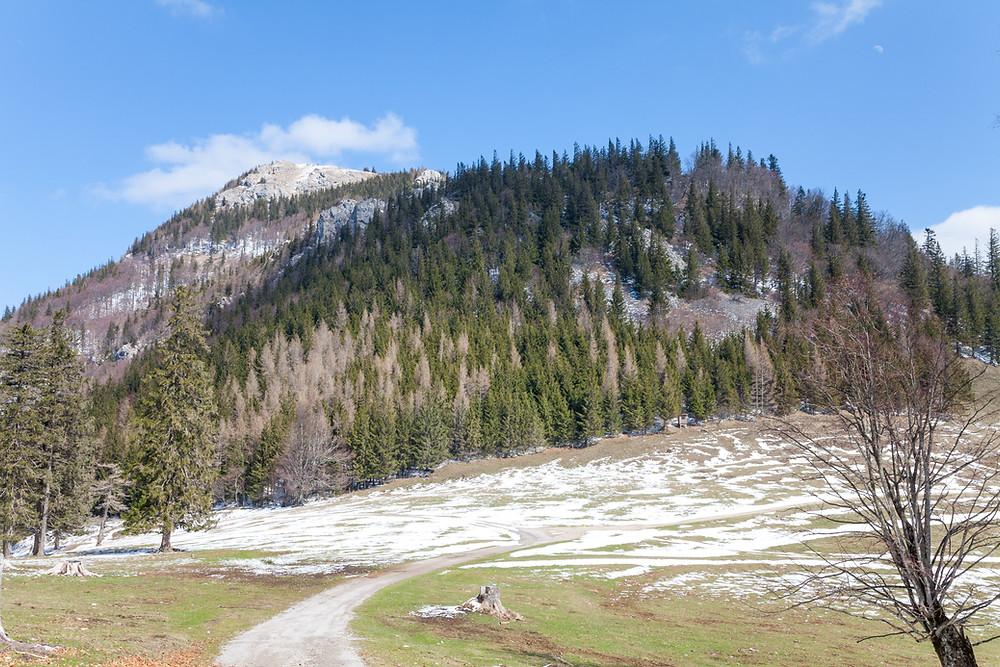 Hochstaff, Hinteralm, Kleinzeller Hinteralm, Gutensteiner Alpen, Alpenvorland, Schindeltal, Niederösterreich, Wandern, Wanderung, Bergwandern,