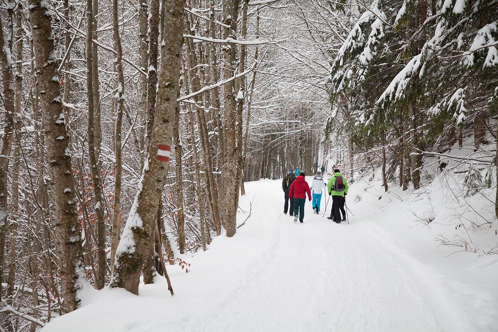 Tirolerkogel, Annaberghaus, Alpen, Wanderung, Wandern, Wanderweg, Winterwandaerung, Winterwandern, Schnee, Winterwald,
