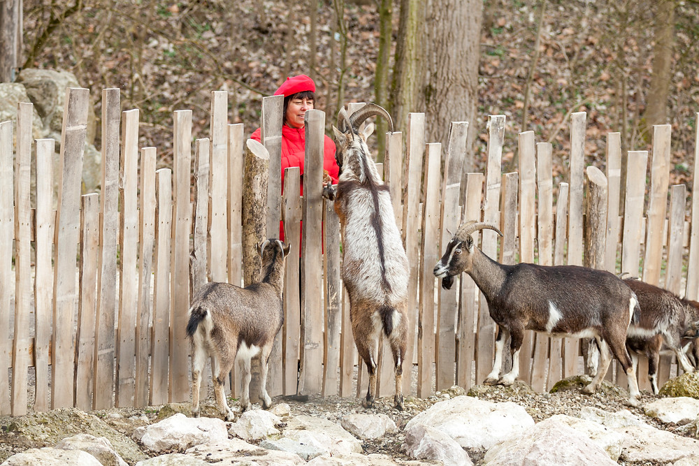 Tierpark Haag, Tierpark Stadt Haag, Tierpark, Mostviertel, NIederösterreich, Ausflug, ganzjährig, Niederösterreich-Card, Tiere, Wildtiere, Ausflugsziel, Erlebniswelt, Tiergarten