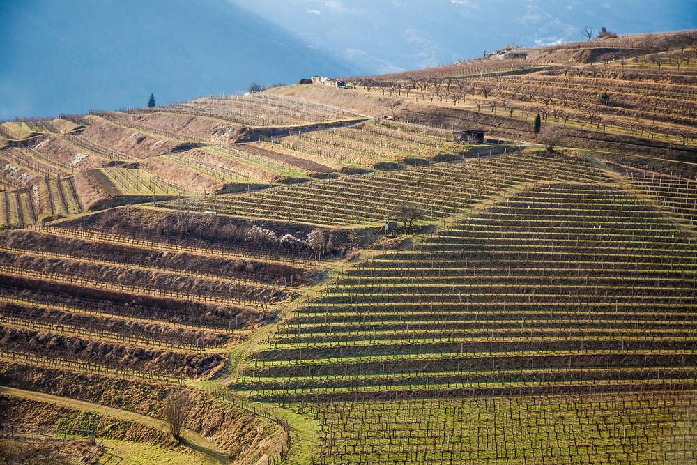 Weinterrassen, Weingärten, Weingarten, Wanderung, Rotes Tor, Spitz an der Donau, Wachau, Niederösterreich, Wandern, Wanderung, Welterbesteig,