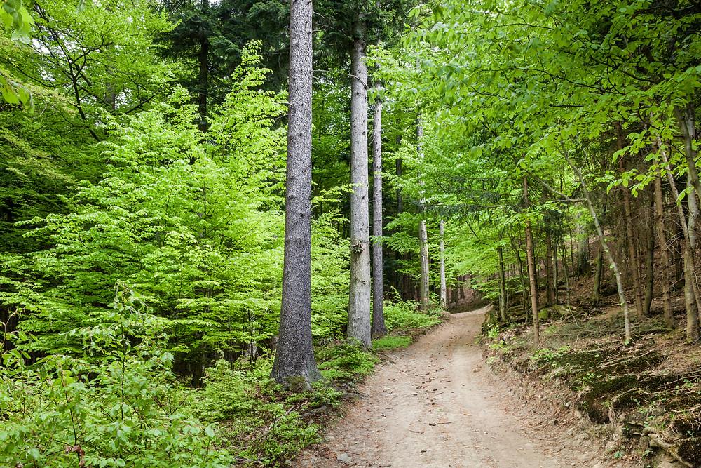 Waldweg, Forstweg, Niederösterreich, Wandern, Mostviertel
