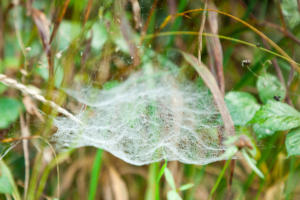 Spinnennetz, Spinne, Makroaufnahme, Detail