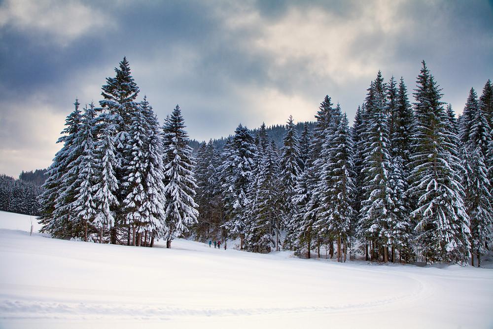 Tirolerkogel, Annaberghaus, Alpen, Wanderung, Wandern, Wanderweg, Winterwandaerung, Winterwandern, Schnee, Winterwald, Windwunderland, Tannenbaum