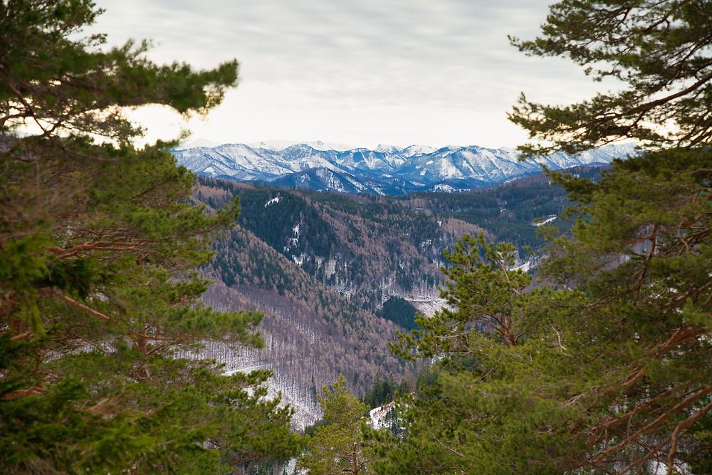 Enziansteig, Steig, Wanderweg, Winterwandern, Kieneck, Gutensteiner Alpen, Wienerwald, Niederösterreich, Wandern, Wanderung, Winterwanderung