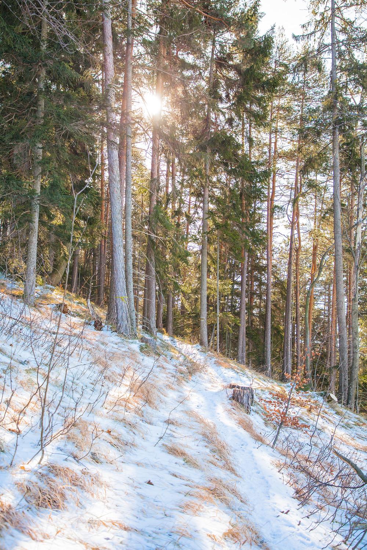 Wanderweg, Steig, Mitterriegel, Unterberg, Voralpen, Niederösterreich, Wandern, Winterwandern, Wanderung, Winterwald, Wanderweg