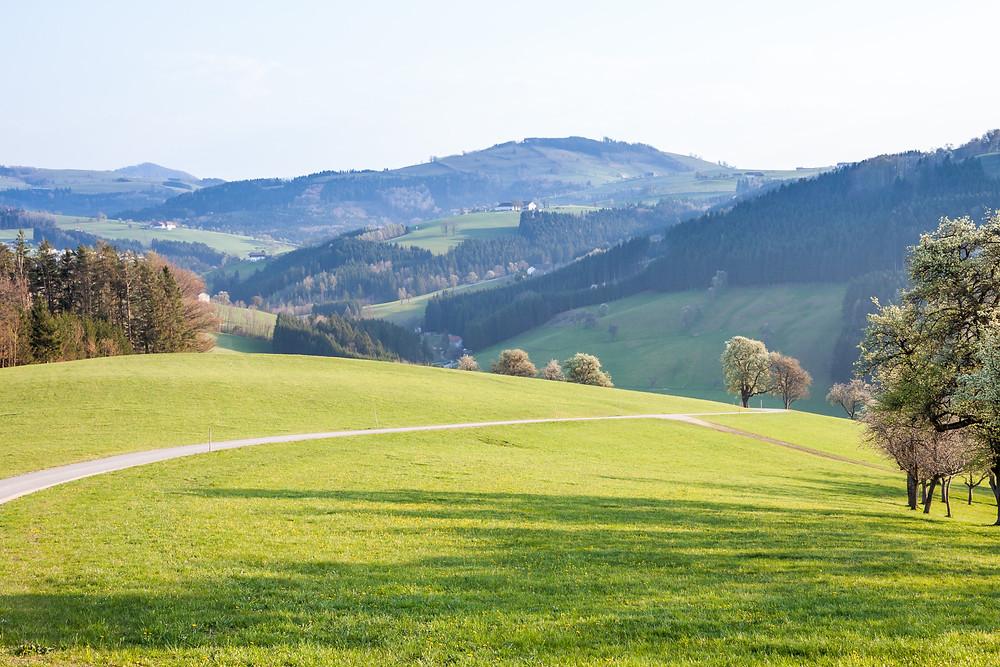 Mostviertel, Niederösterreich, Wandern, Wanderung, Wiese, Alm, Streuobstwiese