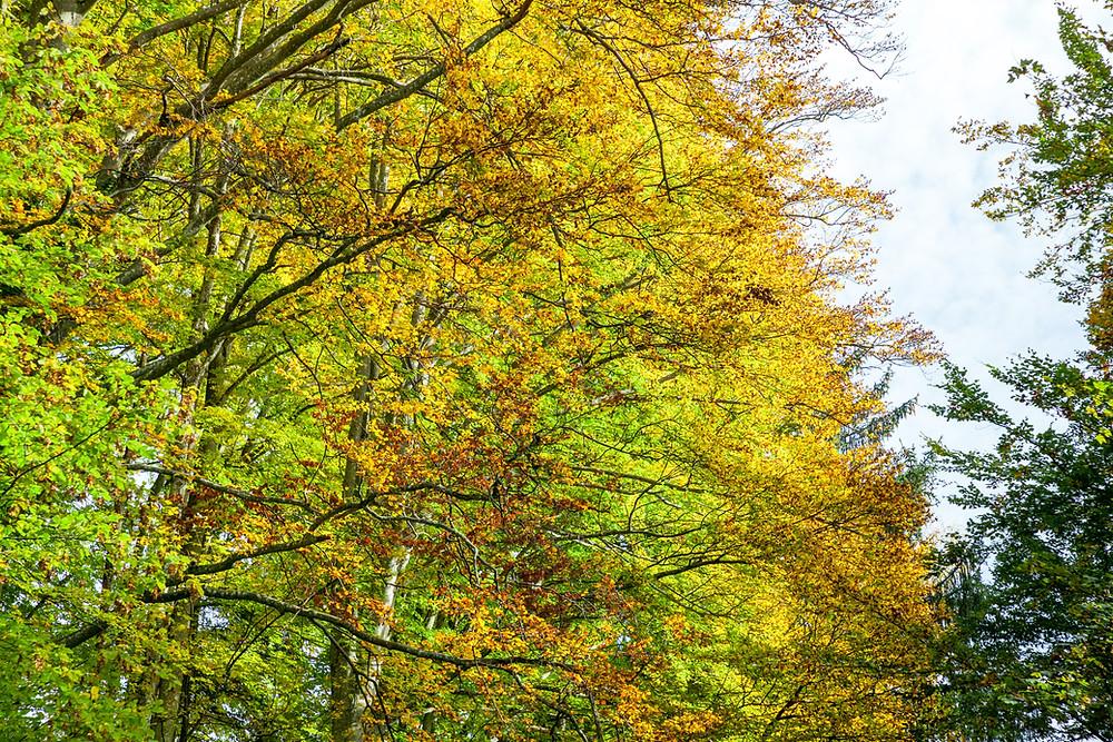 Herbst, Herbstlaub, Wald, Wandern, Wanderung, Niederösterreich, Mostviertel
