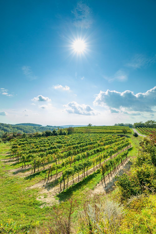 Wandern, Weinviertel, Niederösterreich, Wanderung, Weingarten, Weingärten