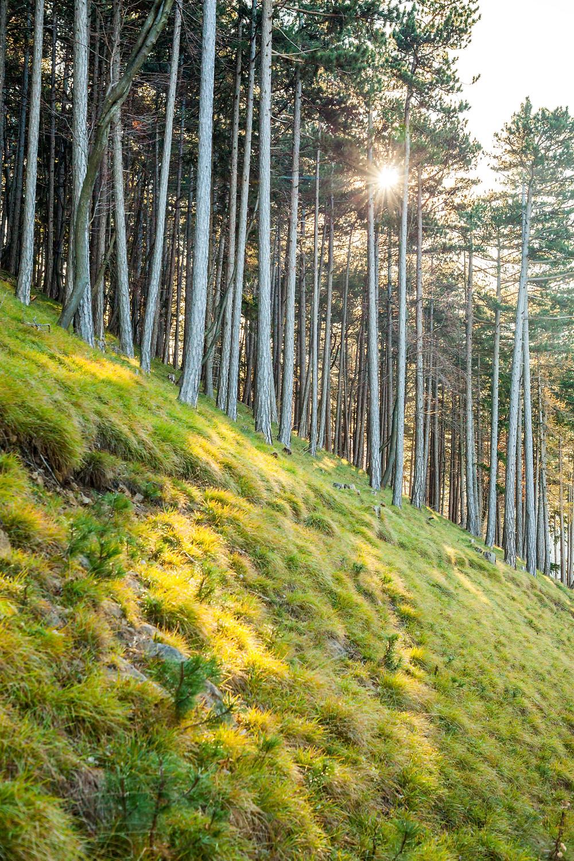 Hocheck, Wienerwald, Niederösterreich, Altenmarkt an der Triesting, wandern, Wanderung, Wandertipp, Herbst, Herbstwanderung, Bergtour, Bergwanderung, Röhrenwald