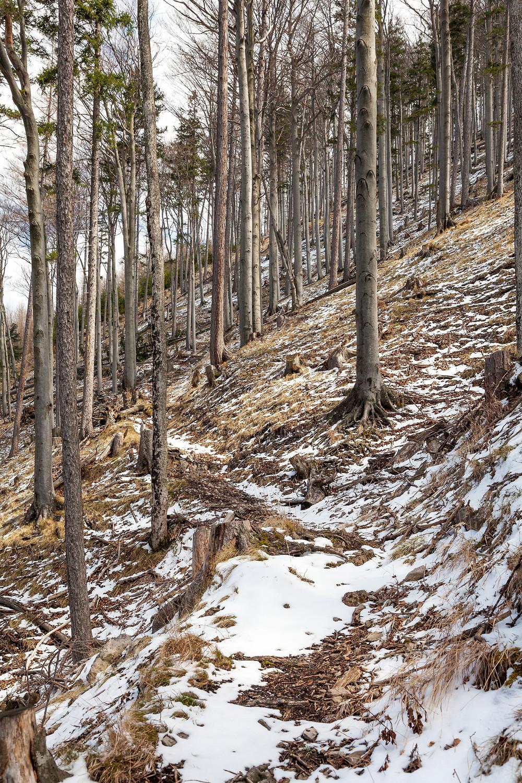 Hinteralm, Kleinzeller Hinteralm, Gutensteiner Alpen, Alpenvorland, Schindeltal, Niederösterreich, Wandern, Wanderung, Bergwandern,
