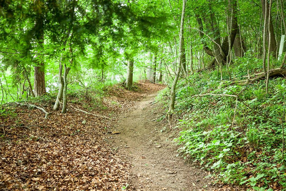 Waldweg, Wandern, Wanderung, Ausflug, Mostviertel,