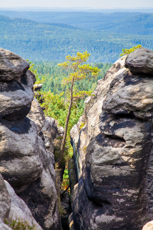 Sächsische Schweiz, Elbsandsteingebirge, Sachsen, Deutschland, Wandern, Wanderung, Wandertipp, Wanderurlaub, Wanderreise, Rundwanderung, Gohrisch