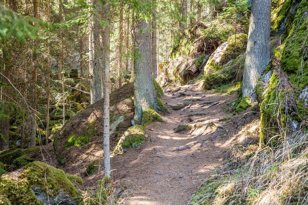 Lohnbachfall, Waldweg, Pfad, Wandern, Wanderung, Waldviertel, Niederösterreich