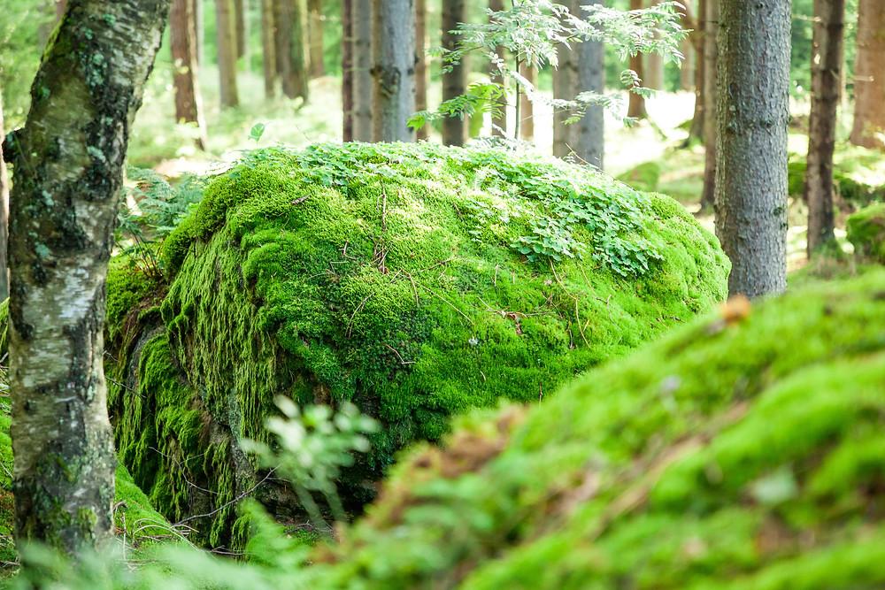 Steinformationen, Wackelsteine, Steine, Felsen, Granit, Waldviertel, Gmünd, Niederösterreich, wandern, Wanderung , Ausflug, Naturerlebnis, Moos