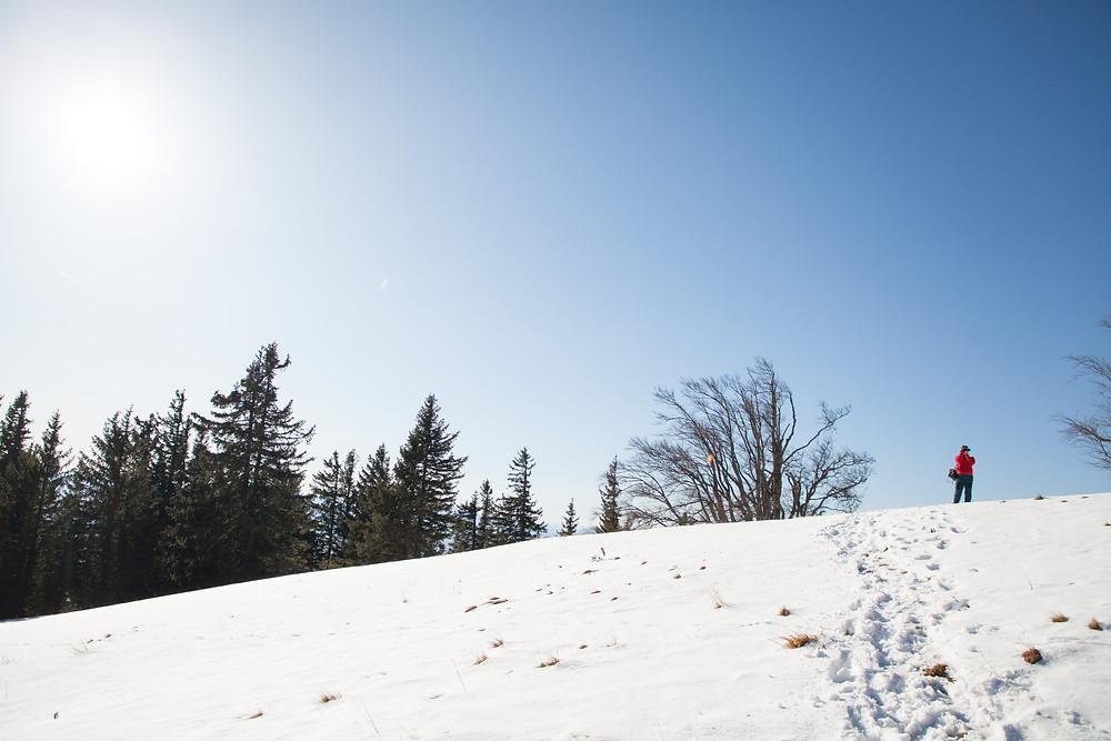 Blochboden, Unterberg, Winter, Schnee, Alm, Weide, Wandern, Wanderung, Niederösterreich, Vorlalpen, Winterwandern