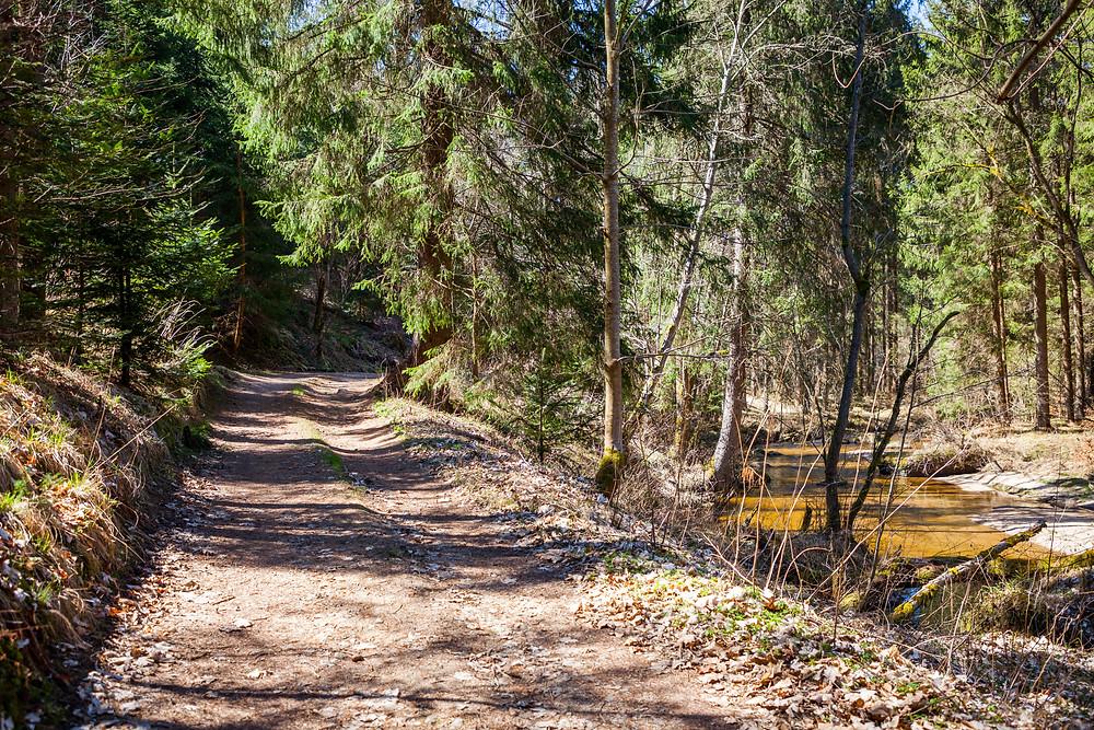 Waldweg, Wanderweg, Kamp, Kamptal, Rappottenstein, Waldviertel, Niederösterreich, Wandern, Wanderung