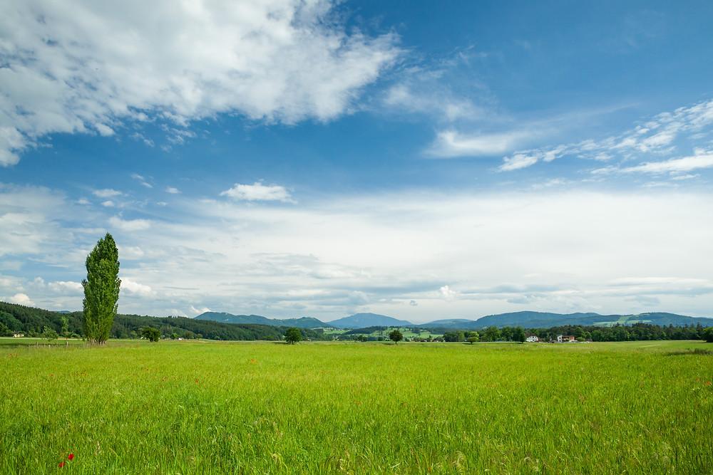 Wiese, Blumenwiese, Gras, weites Land, Niederösterreich, Mostviertel, Wanderung, Wandern, Ausflug, Purgstall