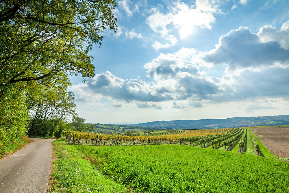 Wandern, Weinviertel, Niederösterreich, Wanderung, Weingärten