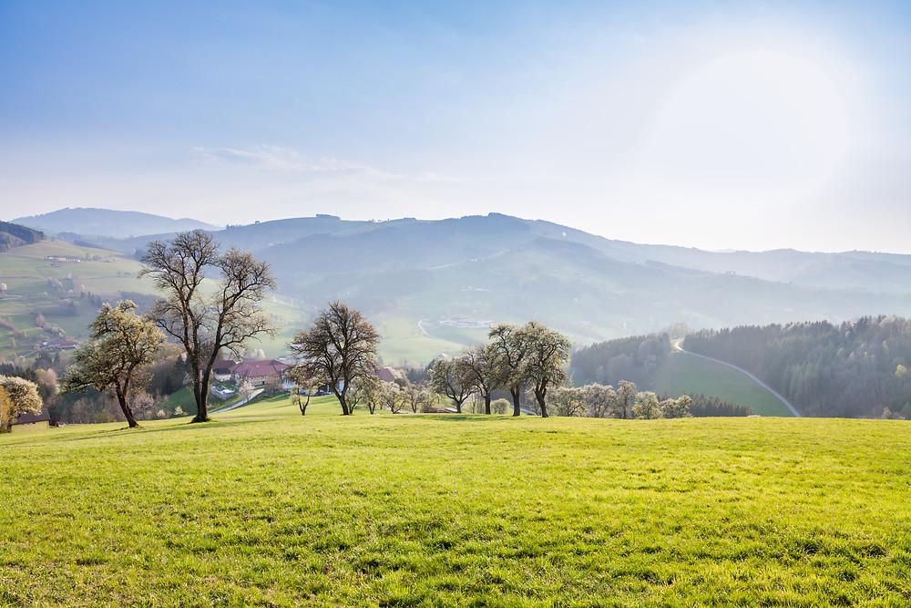 Mostviertel, Niederösterreich, Mostbirnbaum, Baumblüte, Frühling, Wiese, Wandern, Wanderung