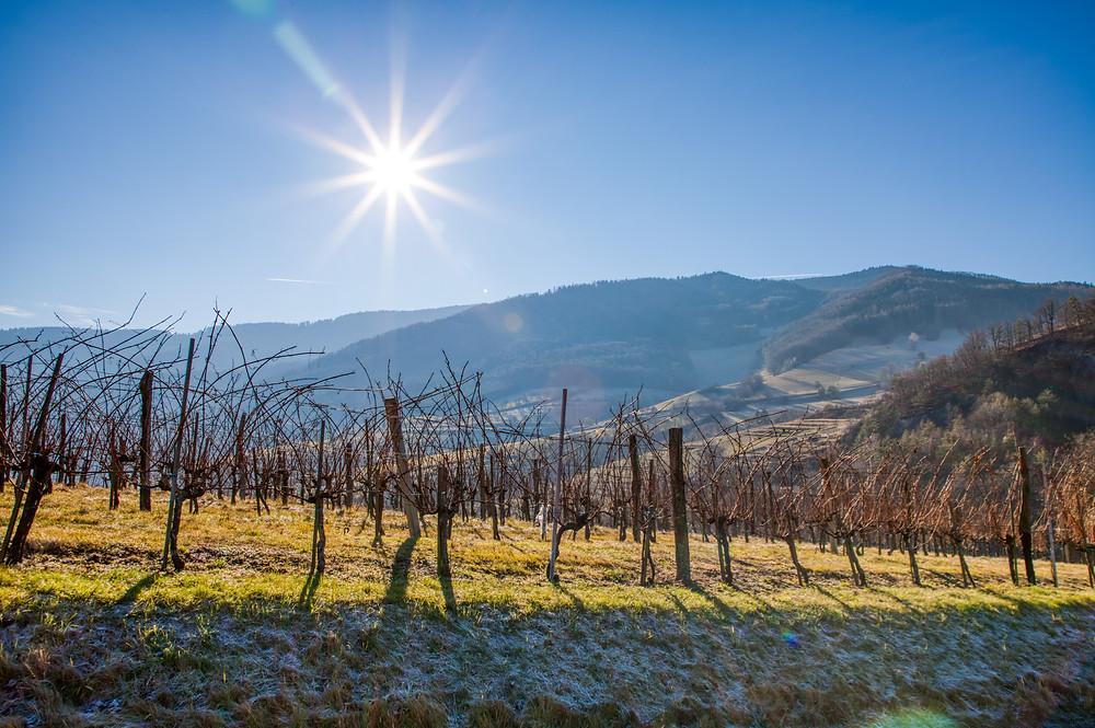 Weingärten, Wachau, Winter, Weingarten, wandern, Wanderung, Niederösterreich