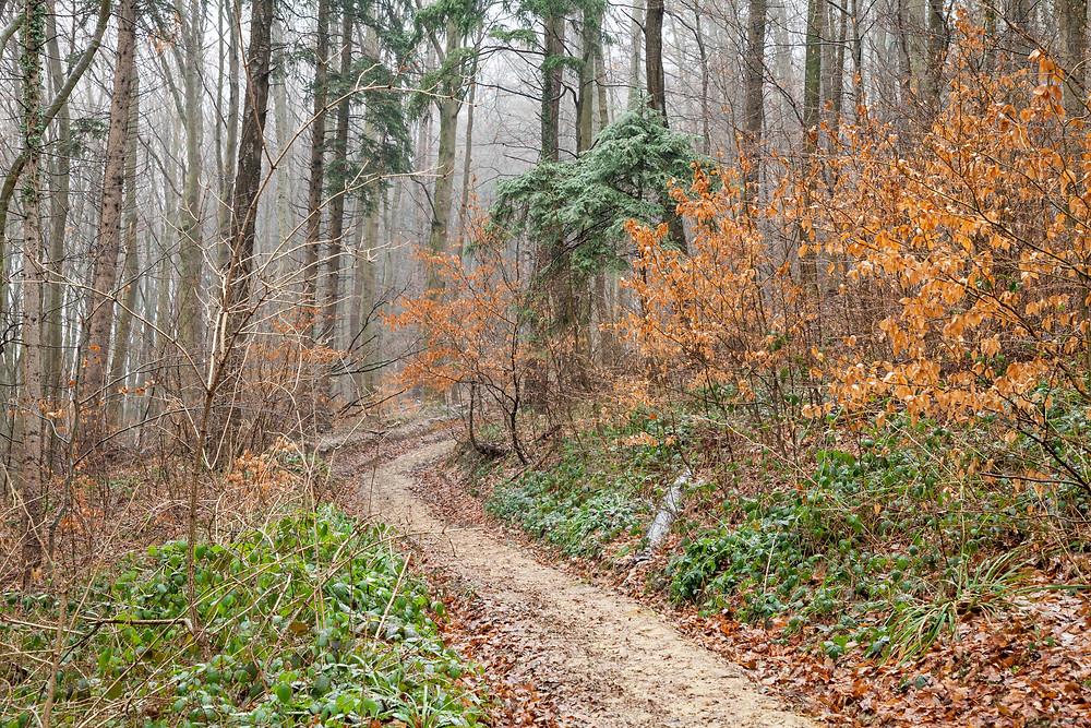 Wienerwald, Niederösterreich, Wandern, Wanderung, Wanderreise, Wanderurlaub, Wandertipp, Winterwandern, Pilgerweg, Troppberg, Troppbergwarte