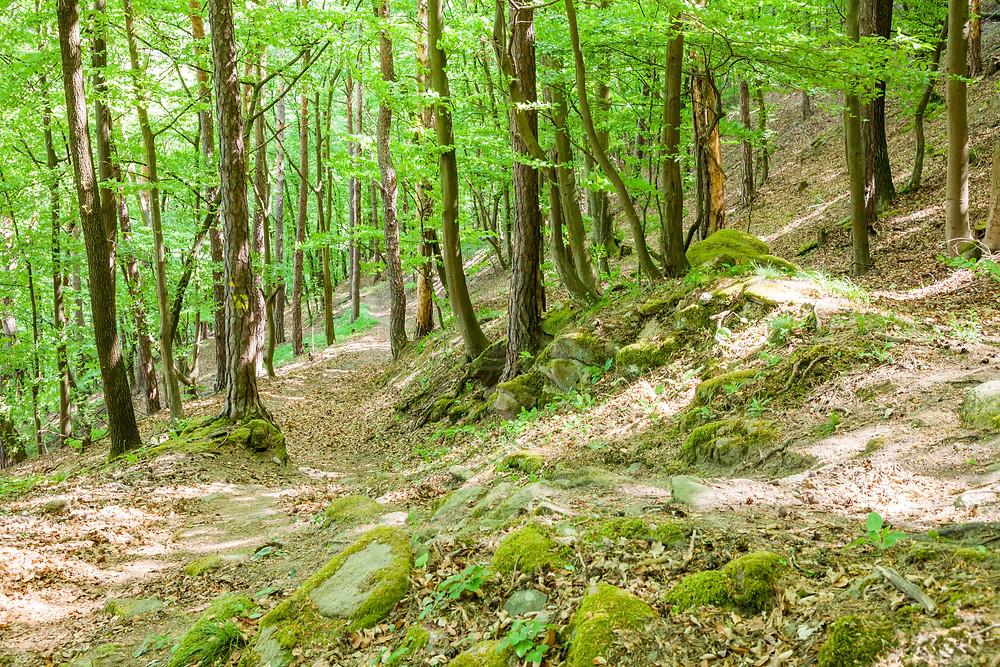 Wachau, Höhenweg, Spitz, Donau, Niederösterreich, Wandern, Ausflug, Wandertipp