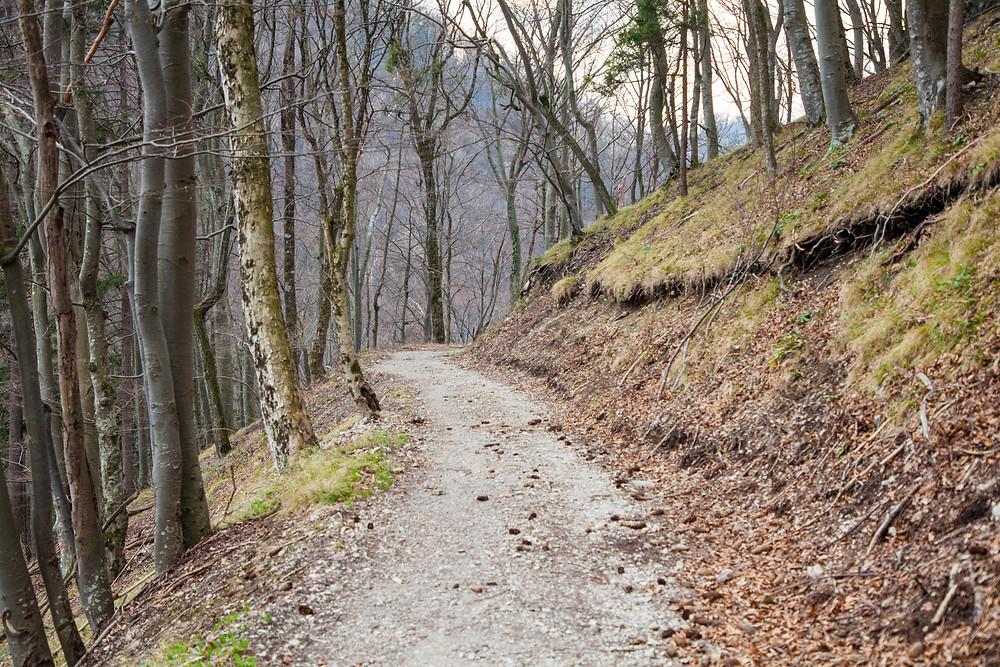 Waldweg, Hohenstein, Pielachtal, Mostviertel, Niederösterreich, Wandern, Wanderung, Bergwandern