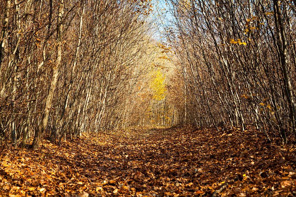 Wienerwald, Niederösterreich, Wandern, Wanderung, Ausflug, Wald, Rundwanderung, Wanderurlaub, Wanderreise, Buchenwald, Herbst