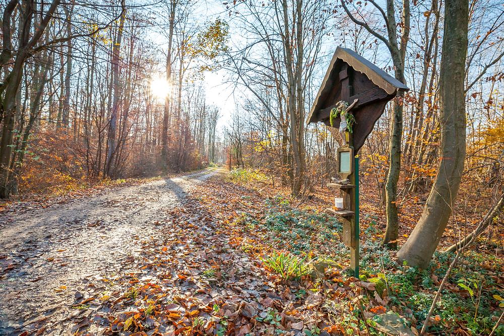 Wienerwald, Niederösterreich, Wandern, Wanderung, Ausflug, Wald, Rundwanderung, Wanderurlaub, Wanderreise, Marterl