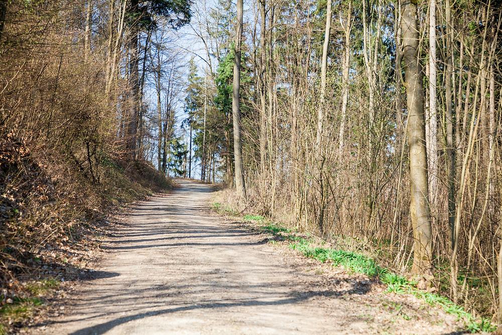 Ruine Rabenstein, Rabenstein, Pielachtal, Niederösterreich, Wandern, Wanderung