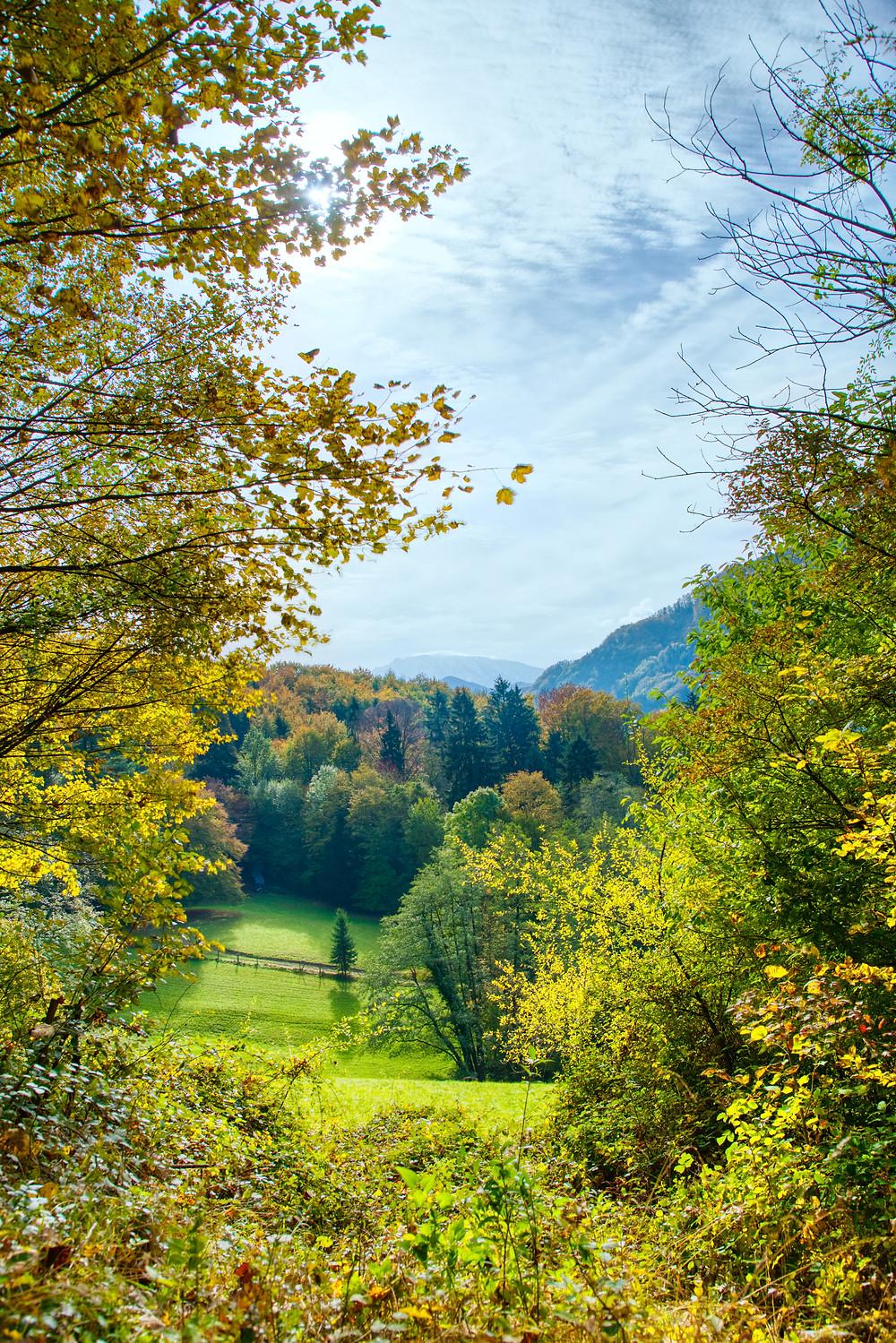 Herbst, Niederösterreich, Mostviertel, Wandern, Wanderung, Laub, Herbstlaub, Wald, Herbstwald