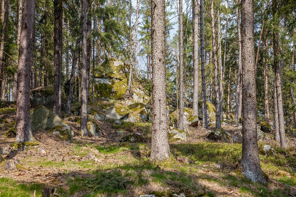Felsen, Steine, Granit, Waldviertel, Ysper, Wandern, Wanderung