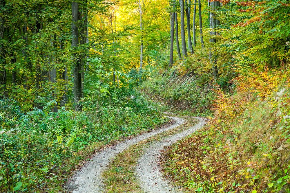 Forstweg, wandern, Wanderung, Wanderweg, Mostviertel, Herbst, Niederösterreich