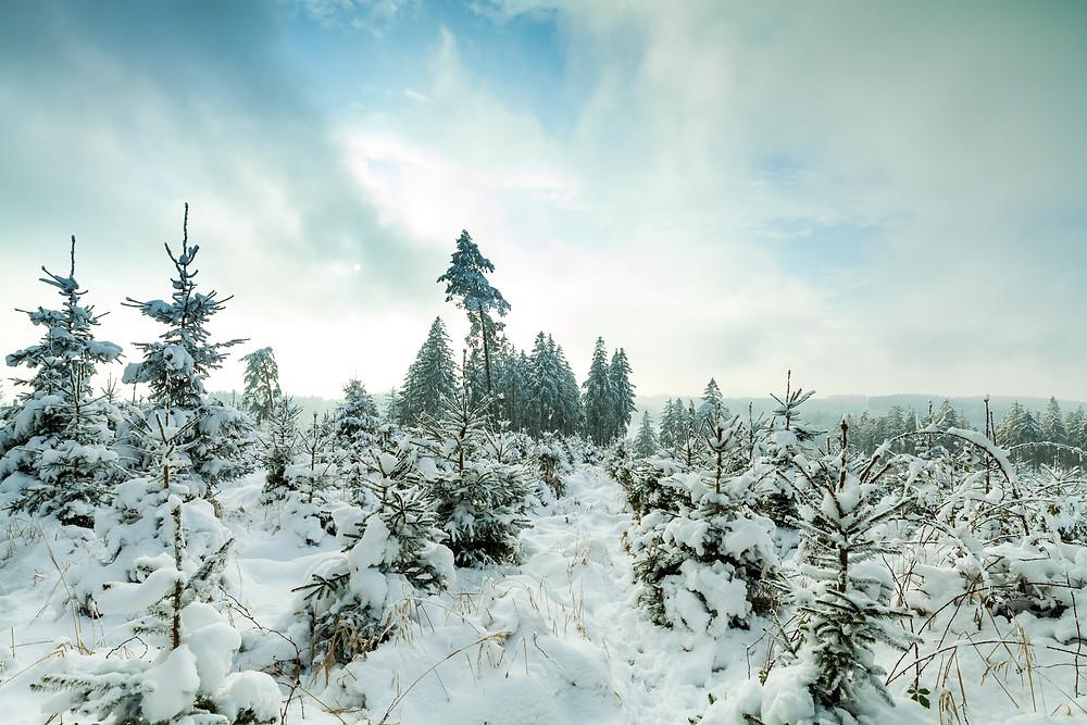 Dunkelsteinerwald, Mostviertel, Niederösterreich, Wandern, Wanderung, Wandertipp, Wanderreise, Wanderurlaub, Österreich, Kurzurlaub, Dunkelstein, Winterwandern, Rundwanderung, Winter, Schnee, Dunkelstein