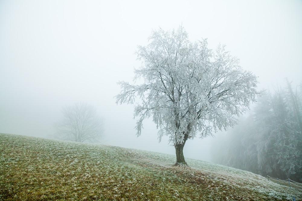 Kaiserkogel, Eschenau, Pielachtal, Traisental, Alpenvorland, Niederösterreich, Wandern, Wanderung, Winterwandern, Winterwanderung, Baum, Raureif