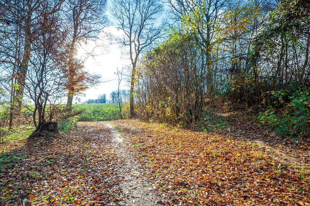 Wienerwald, Niederösterreich, Wandern, Wanderung, Ausflug, Wald, Rundwanderung, Wanderurlaub, Wanderreise