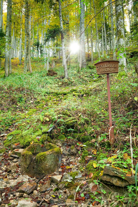 Kallmus-Bründl, Brunnen, Waldbrunnen, Scheibbs, Blassenstein, Wandern, Wanderung, Niederösterreich, Mostviertel