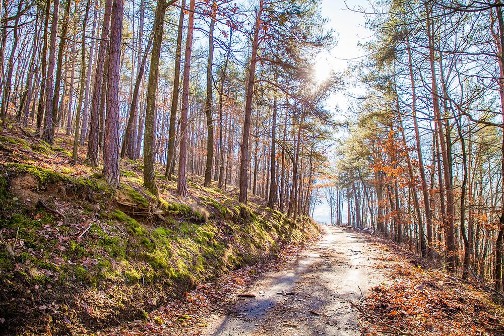 Wanderweg, Bärenwand, Wachau, Spitz an der Donau, Wandern, Wanderungen, Winterwandern