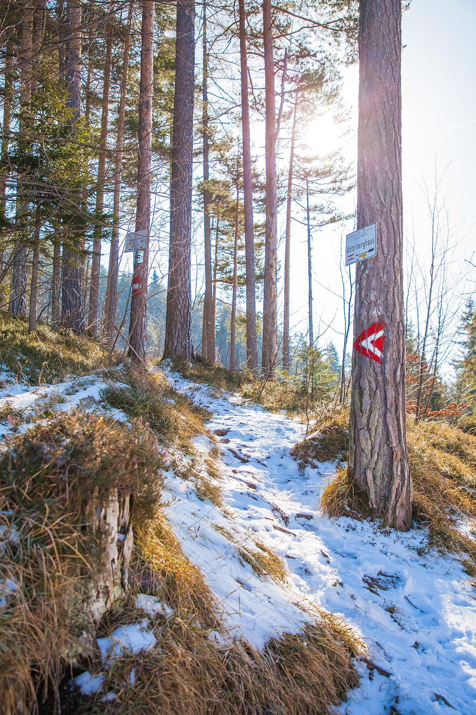 Wandermarkierung, Unterberg, Ramsau, Niederösterreich, Voralpen, Wandern, Wanderungen, Wanderweg, Steig, Winterwandern, Winter, Wald