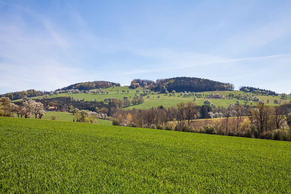 Mostbirn, Mostbirnblüte, Mostviertel, Obstbaum, Streuobstwiesen, Wandern, Wandertipp, Ausflug, Mostobstwanderweg