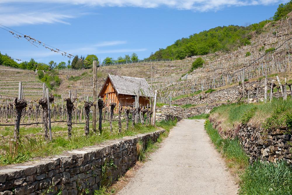 Wanderweg, Wachau, Rotes Tor, Weinreben, Weinrieden, Steinmauern, Niederösterreich, Wandern, Ausflug, Wandertipp