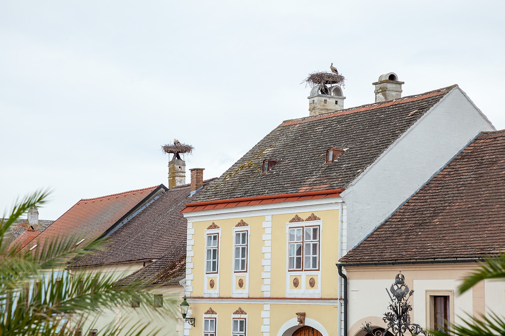 Storch, Störche, Rust, Storchennest, Neusiedler See, Neusiedlersee, Burgenland, Urlaub, Reise, Kurzurlaub