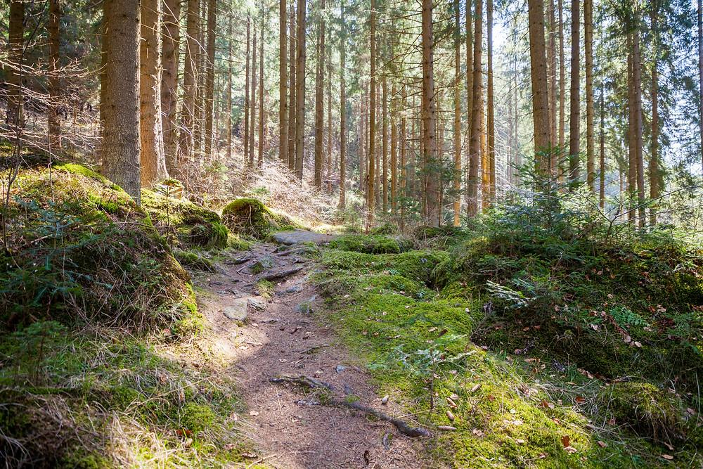 Waldpfad, Steig, Waldweg, Wandern, Wanderung, Kamptal, Kamp, Rappottenstein, Waldviertel, Niederösterreich, Wandern, Wanderung